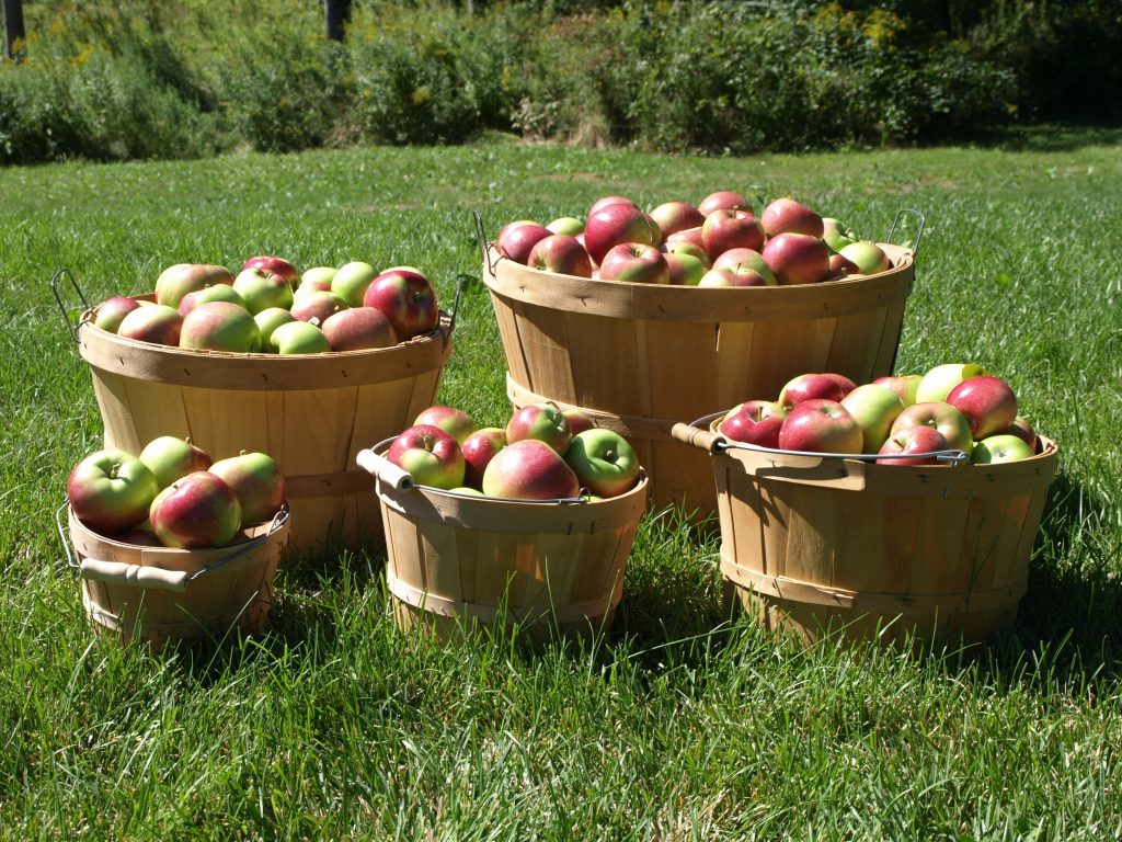 apple-baskets-1024x768