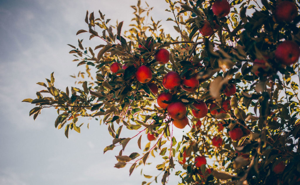 apple_background_4