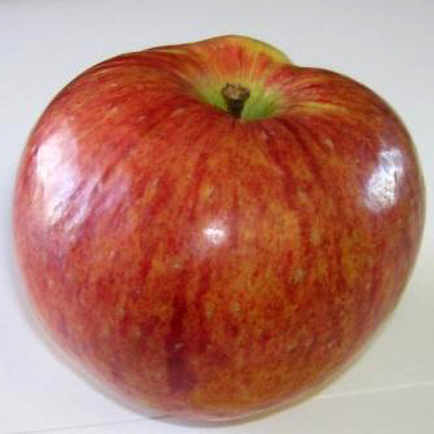 Astrachan Apple