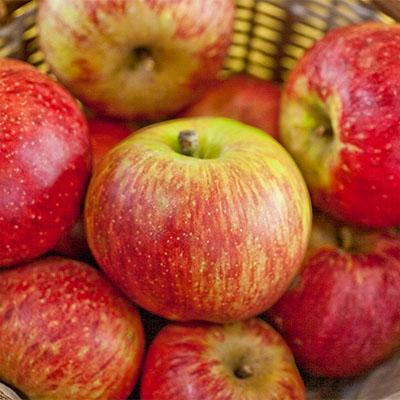 Cortland Apple
