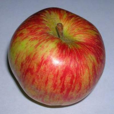 Duchess of Oldenburg Apple