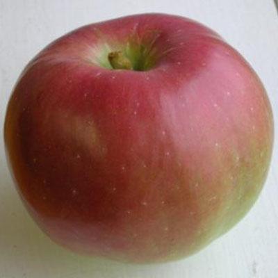 Northernspy Apple