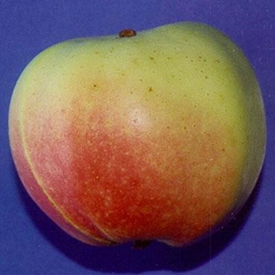 Winter Banana Apple