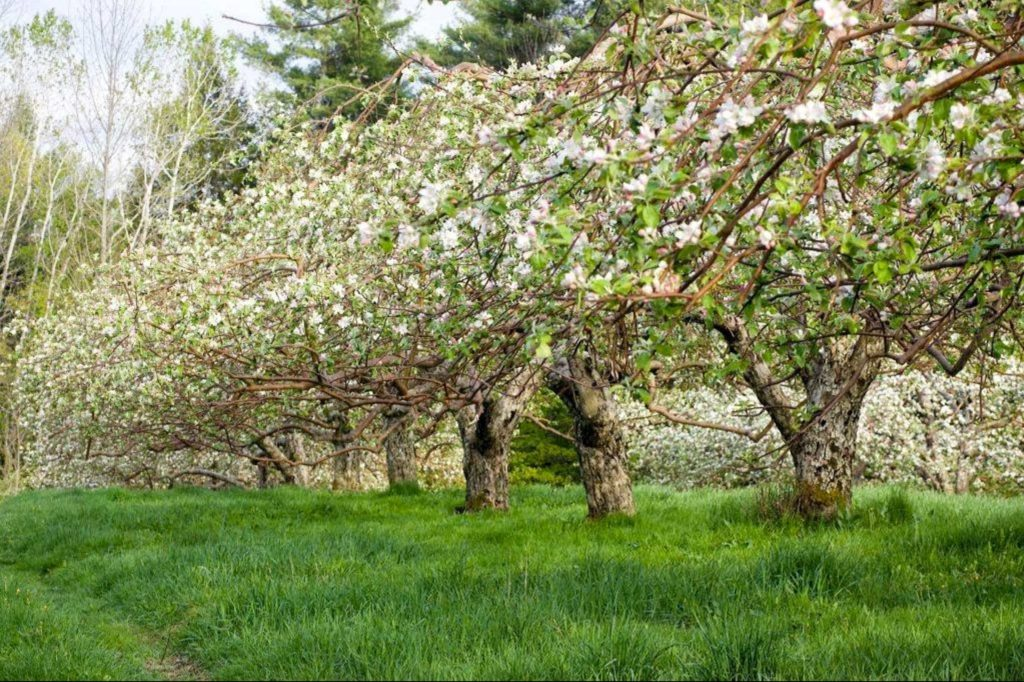 hansels-orchard-2