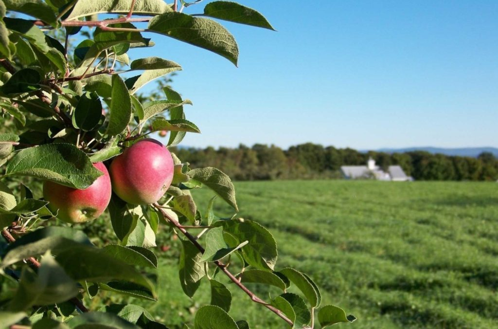 north-star-orchards-3