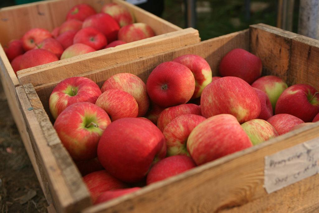 pietree-orchard