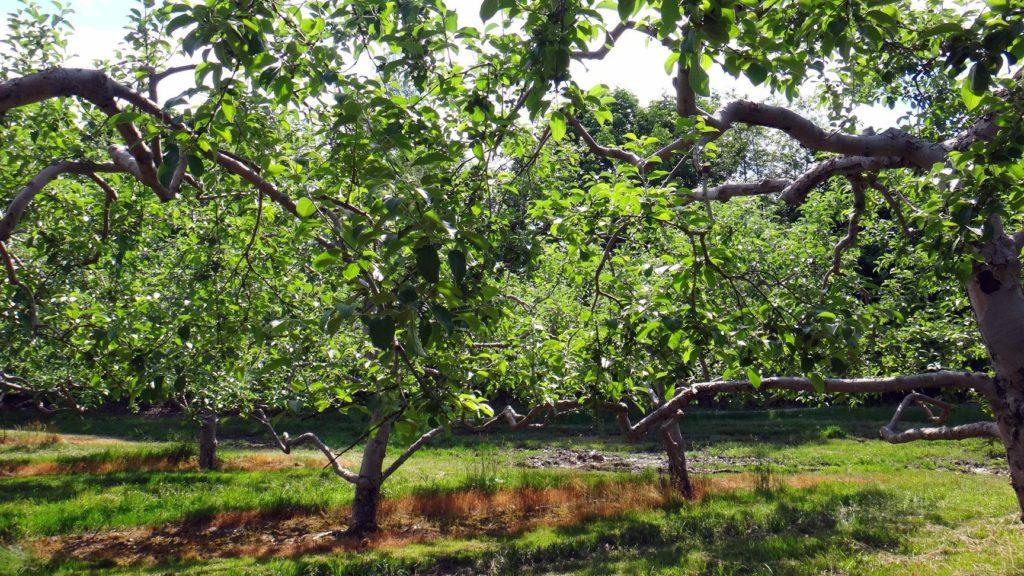 stukas-farm-trees