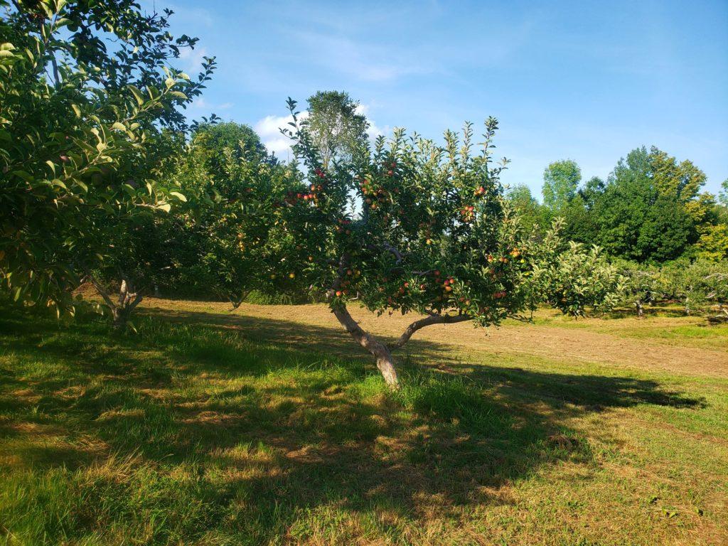 stukas-farm-trees-2