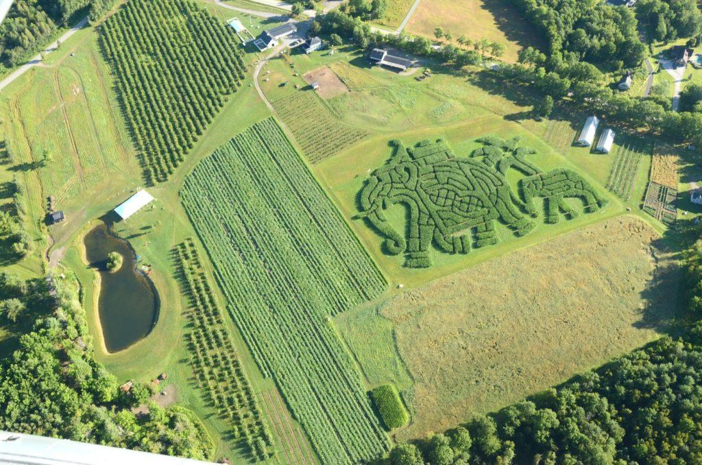 treworgy-orchards-maze